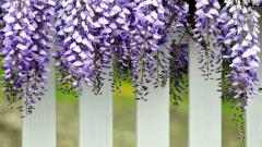 Pretty White Fence Wallpaper 42290