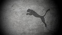 Puma Wallpaper 16476