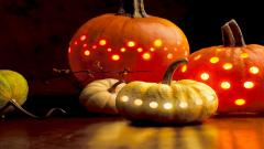 Pumpkin Wallpaper 25768