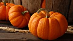 Pumpkin Wallpaper 25769