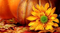 Pumpkin Wallpaper 25774