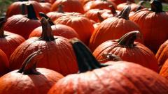 Pumpkin Wallpaper 25781