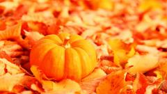 Pumpkin Desktop Wallpaper HD 25775