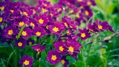 Purple Flowers 14031