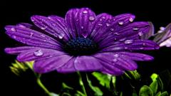 Purple Flowers 14034