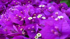 Purple Flowers 14039