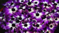 Purple Flowers 14050