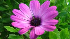 Purple Flowers 14052