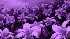 Purple Flowers 14053