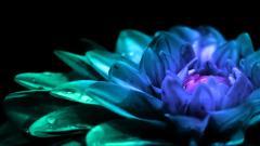 Purple Flowers 14057