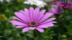 Purple Flowers 14059