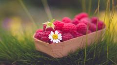 Raspberries 29079