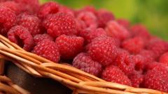 Raspberries Picture 29081