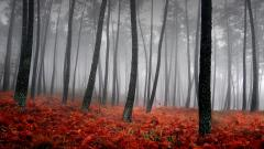 Red Forest Background 33534