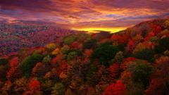 Red Forest Landscape 33539