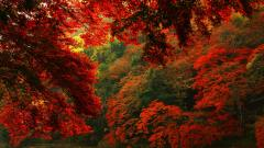 Red Forest Pictures 33537