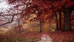 Red Forest Wallpaper 33529