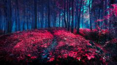 Red Forest Wallpapers 33538