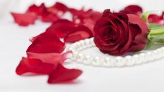 Rose Flowers 7087