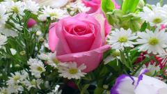 Rose Flowers 7088