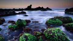 Seascape Pictures 29214