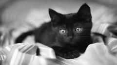 Small Black Cat 24165