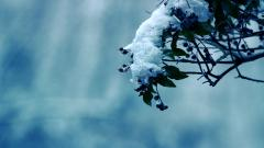 Snow Background 17145