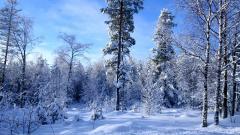 Snow Background 17155