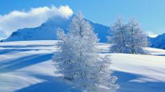 Snow Mountain 16537