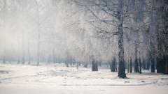 Snowy Trees 32371