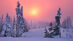 Snowy Trees 32381