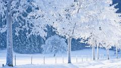 Snowy Trees Background 32376