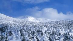Snowy Trees Background 32378