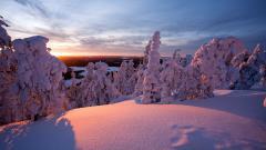 Snowy Trees Landscape 32377