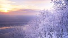 Snowy Trees Wallpaper 32389