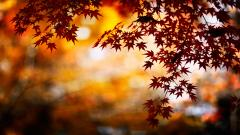Stunning Fall Backgrounds 18185