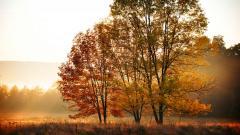Stunning Fall Trees Wallpaper 29499