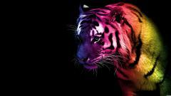 Tiger Photos 4871