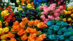 Tulips 12584