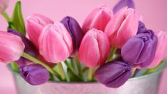 Tulips 12599