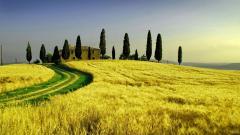 Tuscany Background 30319