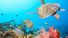 Underwater Wallpaper 7103