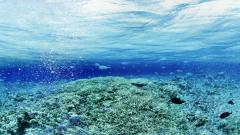 Underwater Wallpaper 7106