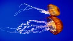 Underwater Wallpaper 7110
