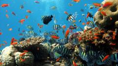 Underwater Wallpaper 7115