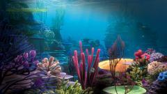 Underwater Wallpaper 7116