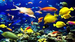Underwater Wallpaper 7118