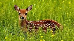 Wildlife HD 30811