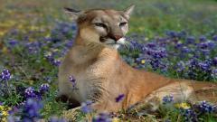 Wildlife Pictures 30807