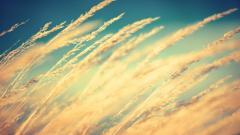 Wind Wallpaper 29097